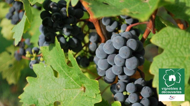 Confinement : 10 bonnes raisons de vous faire livrer nos vins.